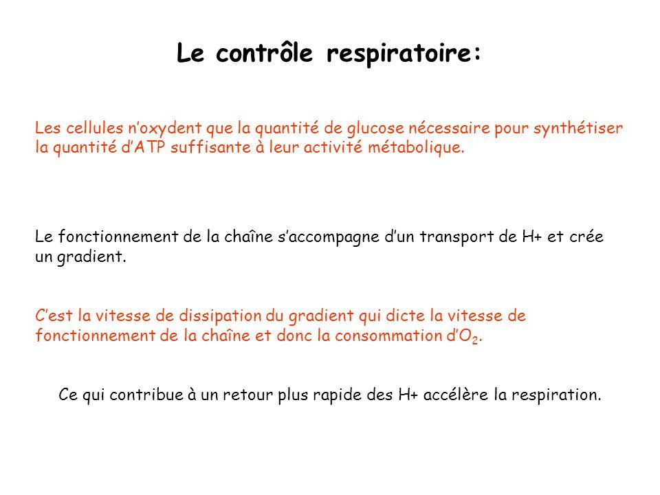 Le contrôle respiratoire: Les cellules noxydent que la quantité de glucose nécessaire pour synthétiser la quantité dATP suffisante à leur activité mét