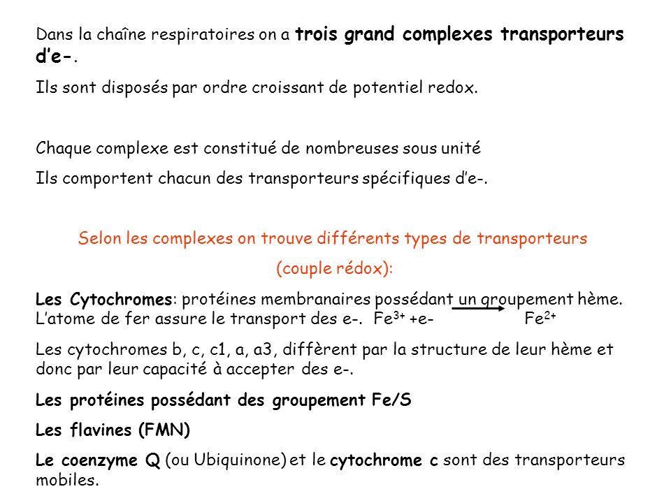 Dans la chaîne respiratoires on a trois grand complexes transporteurs de-. Ils sont disposés par ordre croissant de potentiel redox. Chaque complexe e