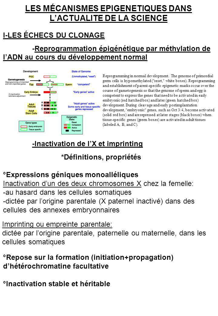 *Un point sur linactivation de lX (X chromosome inactivation XCI) Mary Lyon, 1961: un des deux chromosomes X doit être inactivé au hasard dans chaque cellule somatique ce mécanisme doit contribuer à rendre égaux les niveaux dexpression des gènes du X chez le male et la femelle Dans les années 1970s, chez les marsupiaux et dans certains tissus des annexes embryonnaires murines le X dorigine paternelle est inactivé de façon préférentielle A partir des années1990s, il existe un centre dinactivation du X le silencing implique Xist Xist est régulé par un « gène antisens » Tsix Xist and Tsix expression during early female mouse development.