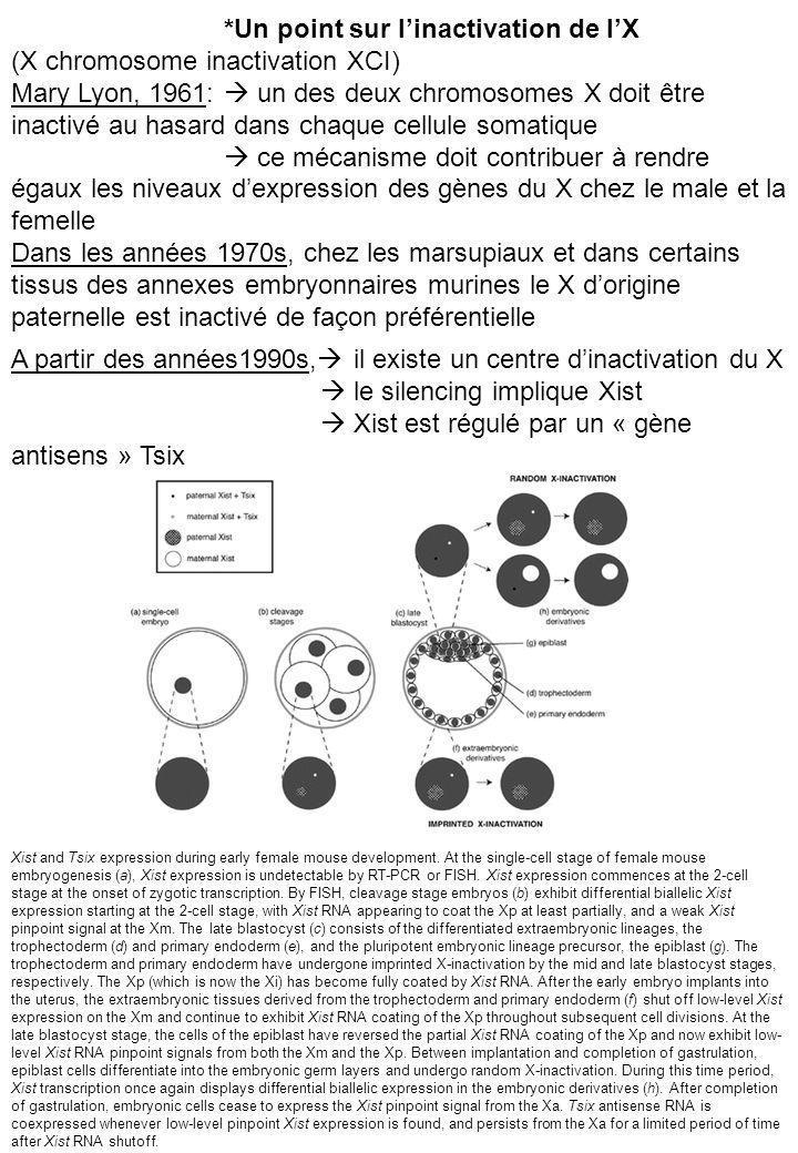 *Un point sur linactivation de lX (X chromosome inactivation XCI) Mary Lyon, 1961: un des deux chromosomes X doit être inactivé au hasard dans chaque