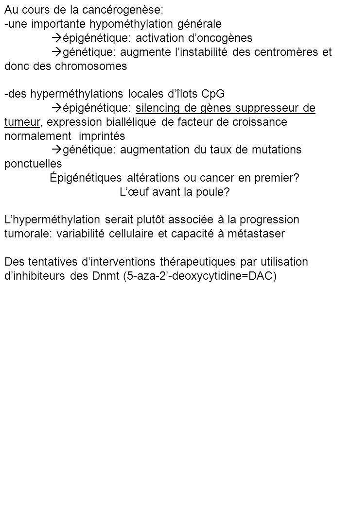 Au cours de la cancérogenèse: -une importante hypométhylation générale épigénétique: activation doncogènes génétique: augmente linstabilité des centro