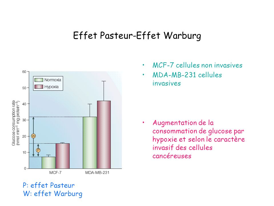 Effet Pasteur-Effet Warburg MCF-7 cellules non invasives MDA-MB-231 cellules invasives Augmentation de la consommation de glucose par hypoxie et selon