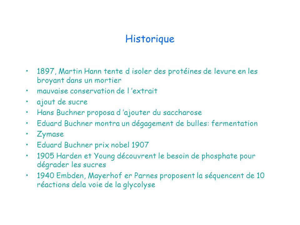 Historique 1897, Martin Hann tente d isoler des protéines de levure en les broyant dans un mortier mauvaise conservation de l extrait ajout de sucre H