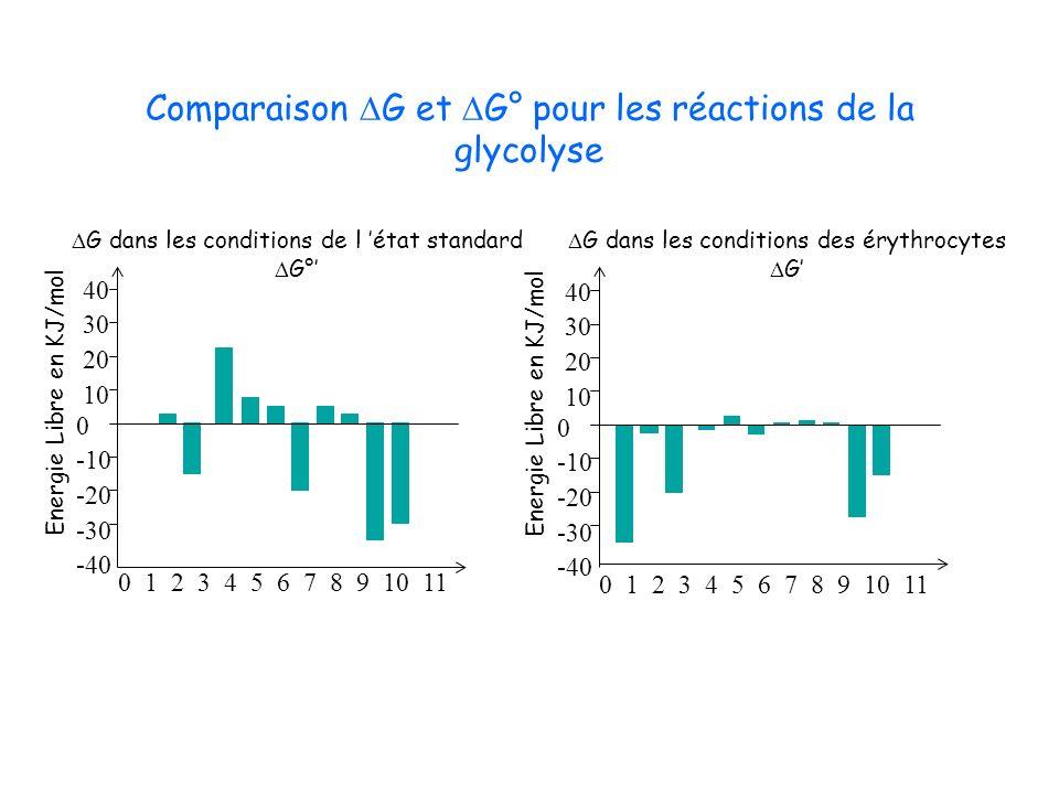 Comparaison G et G° pour les réactions de la glycolyse 0 -10 -20 -30 -40 40 30 20 10 0 1 2 3 4 5 6 7 8 9 10 11 0 -10 -20 -30 -40 40 30 20 10 0 1 2 3 4
