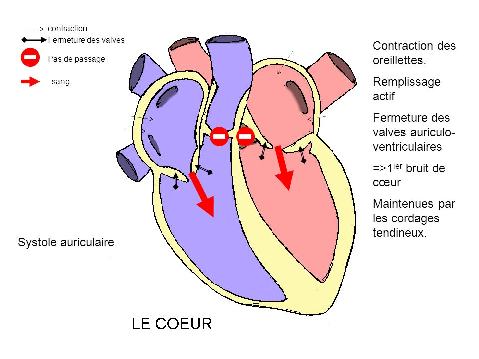 contraction Fermeture des valves Contraction des oreillettes.