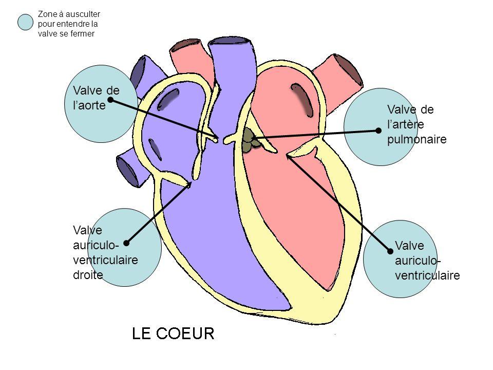 Zone à ausculter pour entendre la valve se fermer Valve de laorte Valve auriculo- ventriculaire droite Valve de lartère pulmonaire Valve auriculo- ven
