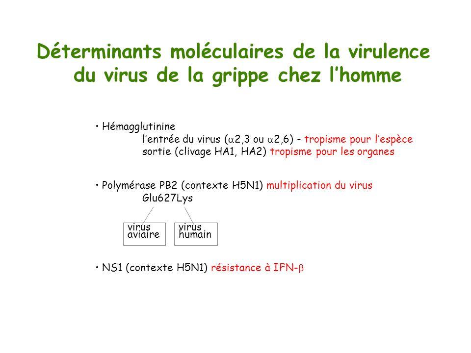 Déterminants moléculaires de la virulence du virus de la grippe chez lhomme Hémagglutinine lentrée du virus ( 2,3 ou 2,6) - tropisme pour lespèce sort