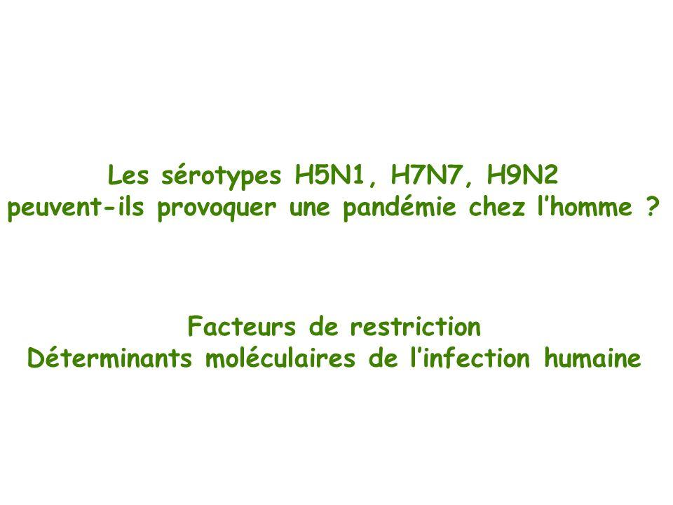 Les sérotypes H5N1, H7N7, H9N2 peuvent-ils provoquer une pandémie chez lhomme ? Facteurs de restriction Déterminants moléculaires de linfection humain