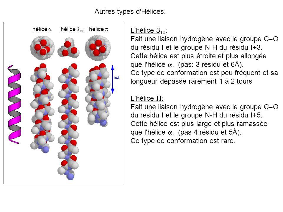 Autres types d'Hélices. hélice L'hélice 3 10 : Fait une liaison hydrogène avec le groupe C=O du résidu I et le groupe N-H du résidu I+3. Cette hélice