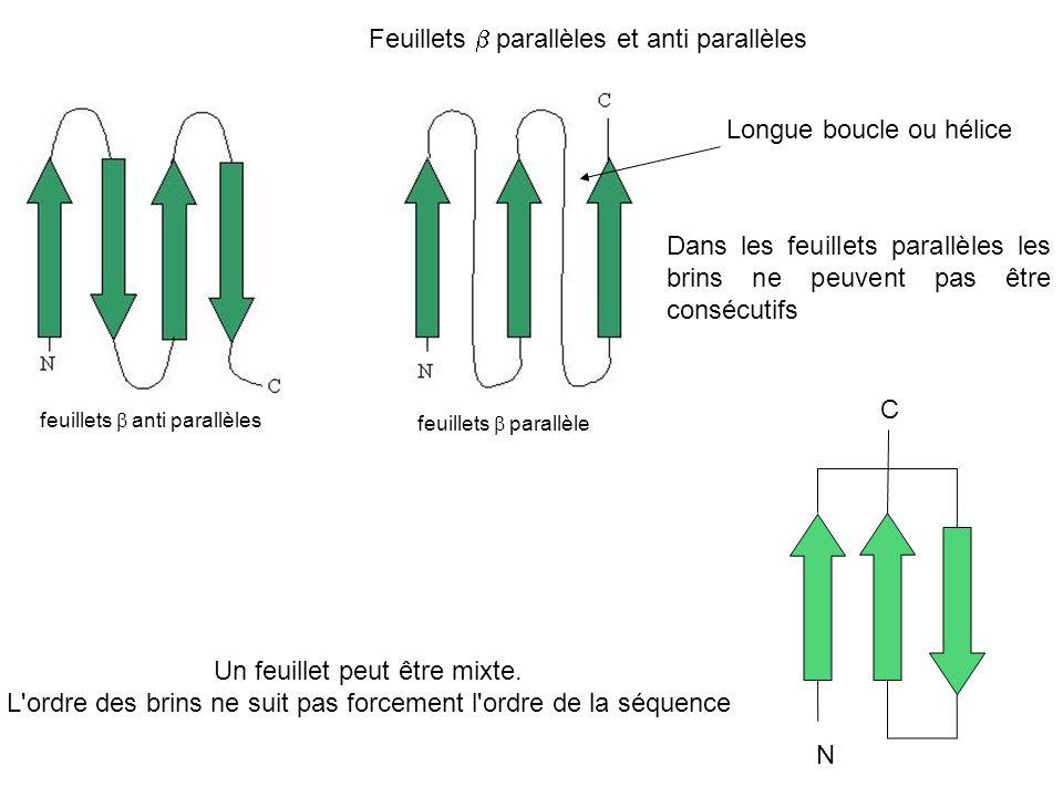Feuillets parallèles et anti parallèles Dans les feuillets parallèles les brins ne peuvent pas être consécutifs feuillets parallèle feuillets anti par