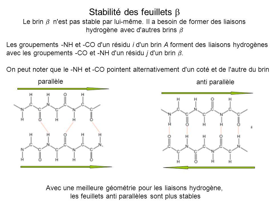 Stabilité des feuillets Le brin n'est pas stable par lui-même. Il a besoin de former des liaisons hydrogène avec d'autres brins Les groupements -NH et