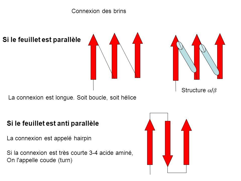 Connexion des brins Si le feuillet est parallèle La connexion est longue. Soit boucle, soit hélice Structure Si le feuillet est anti parallèle La conn