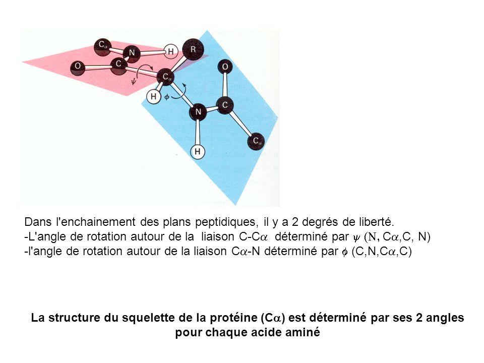 Dans l'enchainement des plans peptidiques, il y a 2 degrés de liberté. -L'angle de rotation autour de la liaison C-C déterminé par C,C, N) -l'angle de