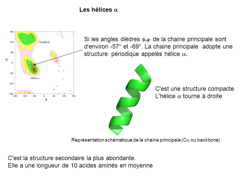 Si les angles dièdres de la chaine principale sont d'environ -57° et -69°. La chaine principale adopte une structure périodique appelés hélice C'est u