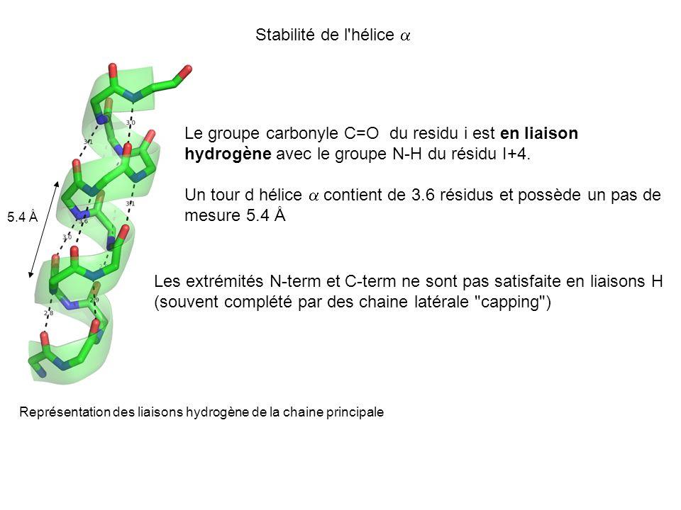 Le groupe carbonyle C=O du residu i est en liaison hydrogène avec le groupe N-H du résidu I+4. Un tour d hélice contient de 3.6 résidus et possède un