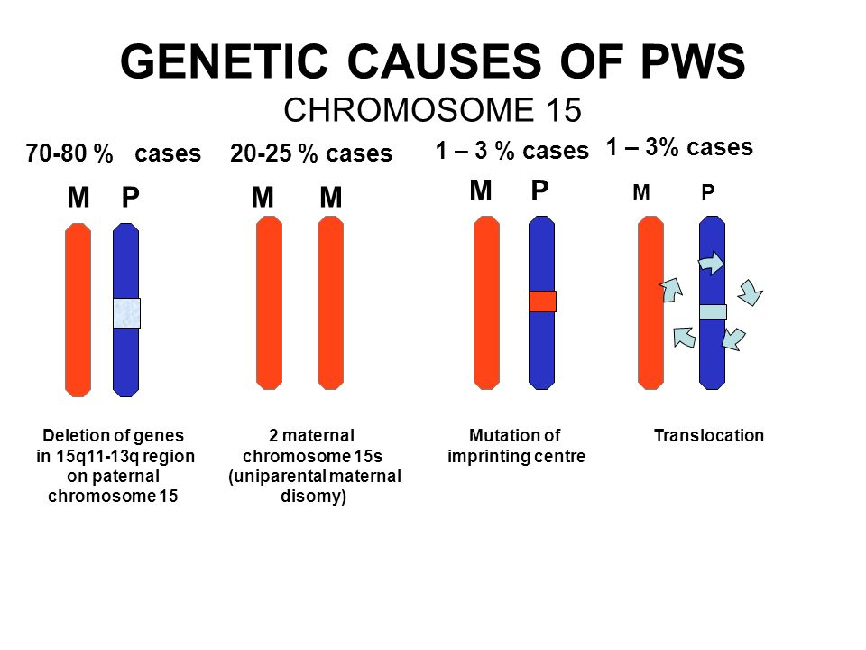 GENETIC CAUSES OF PWS CHROMOSOME 15 MPM P M M Deletion of genes in 15q11-13q region on paternal chromosome 15 2 maternal chromosome 15s (uniparental maternal disomy) Mutation of imprinting centre 70-80 % cases 20-25 % cases 1 – 3 % cases Translocation MP 1 – 3% cases