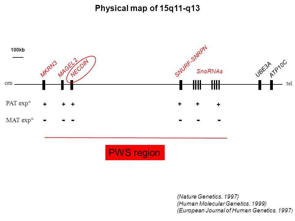 Physical map of 15q11-q13 (Nature Genetics. 1997) (Human Molecular Genetics. 1999) (European Journal of Human Genetics. 1997 ) SNURF-SNRPN NECDIN MAGE
