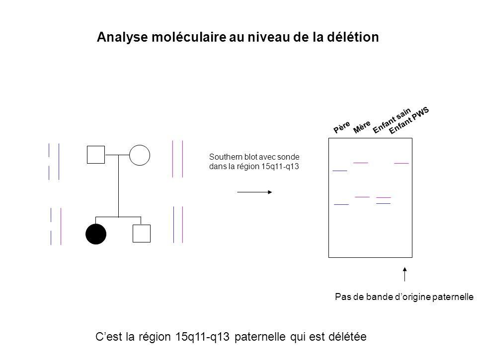 Grand-mère paternelle Grand-père paternel X X X X X X Grand-mère paternelle Mère IC IC délété : pas deffacement de lempreinte maternelle de 15q11-q13 durant la gamétogenèse mâle Conservation dune empreinte maternelle Cas normalCas dune mutation du centre de lempreinte héritée de la grand-mère paternelle Gamétogenèse chez le père Enfant PWS : 2 régions 15q11-q13 à épigénotype maternel : pas dexp° des gènes paternels IC Enfant sain
