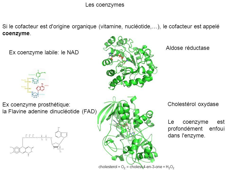 Si le cofacteur est d'origine organique (vitamine, nucléotide,…), le cofacteur est appelé coenzyme. Ex coenzyme labile: le NAD Ex coenzyme prosthétiqu
