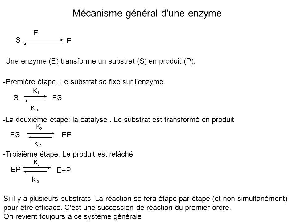 Mécanisme général d'une enzyme S P E Une enzyme (E) transforme un substrat (S) en produit (P). SES -Première étape. Le substrat se fixe sur l'enzyme -