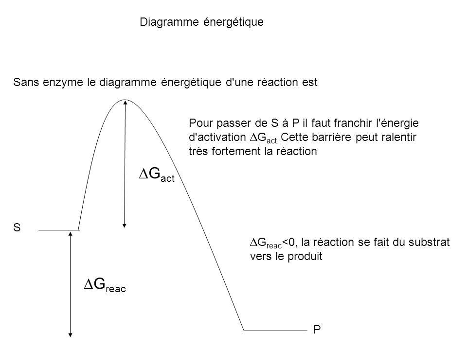 Diagramme énergétique Sans enzyme le diagramme énergétique d'une réaction est S P G reac G reac <0, la réaction se fait du substrat vers le produit G