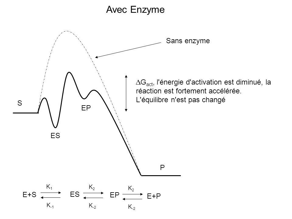 S P Sans enzyme Avec Enzyme ES EP G act, l'énergie d'activation est diminué, la réaction est fortement accélérée. L'équilibre n'est pas changé E+S ES