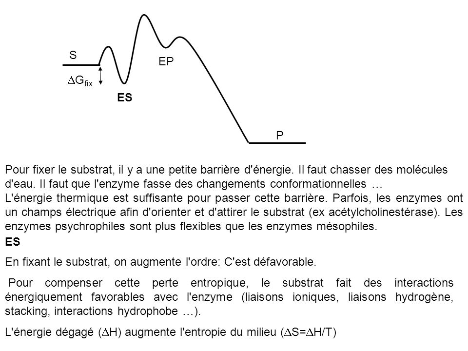 Pour fixer le substrat, il y a une petite barrière d'énergie. Il faut chasser des molécules d'eau. Il faut que l'enzyme fasse des changements conforma