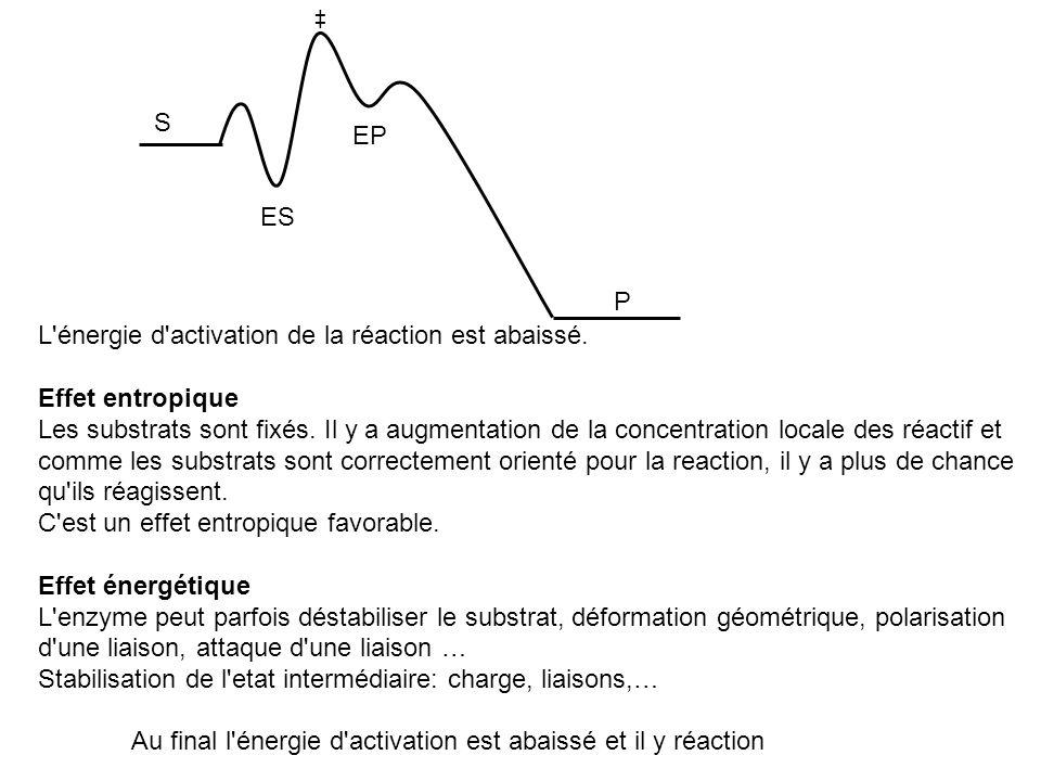 S P ES EP L'énergie d'activation de la réaction est abaissé. Effet entropique Les substrats sont fixés. Il y a augmentation de la concentration locale