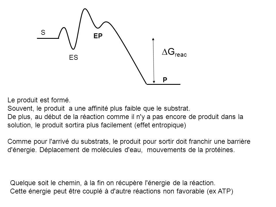 S P ES EP Le produit est formé. Souvent, le produit a une affinité plus faible que le substrat. De plus, au début de la réaction comme il n'y a pas en