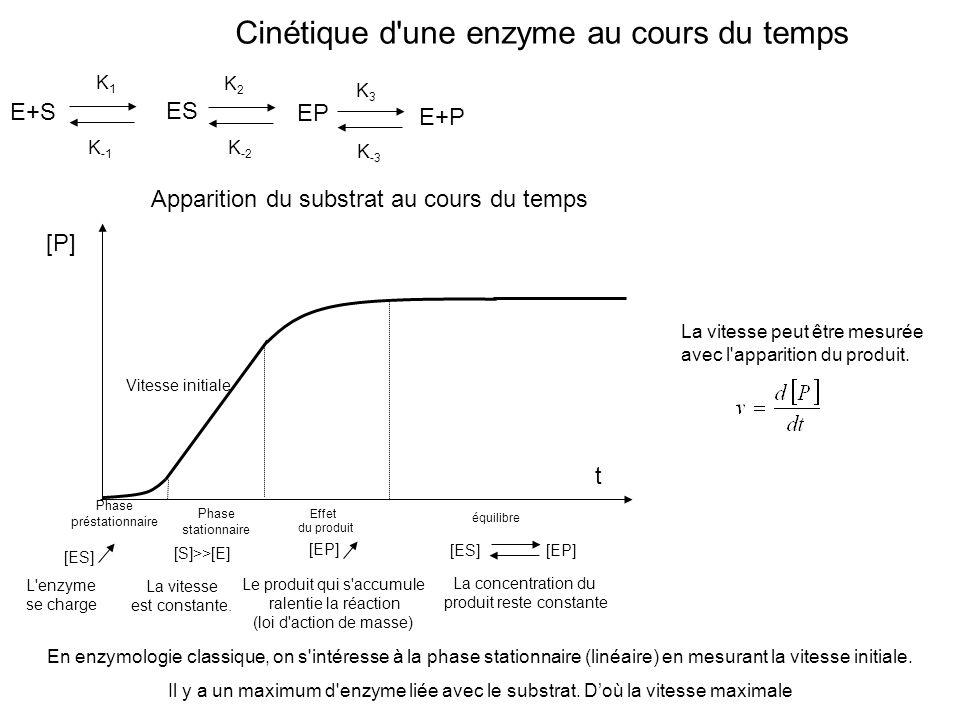 Cinétique d'une enzyme au cours du temps E+S ES K -1 K -2 EP K3K3 K -3 E+P Phase préstationnaire [ES] [P] Apparition du substrat au cours du temps L'e