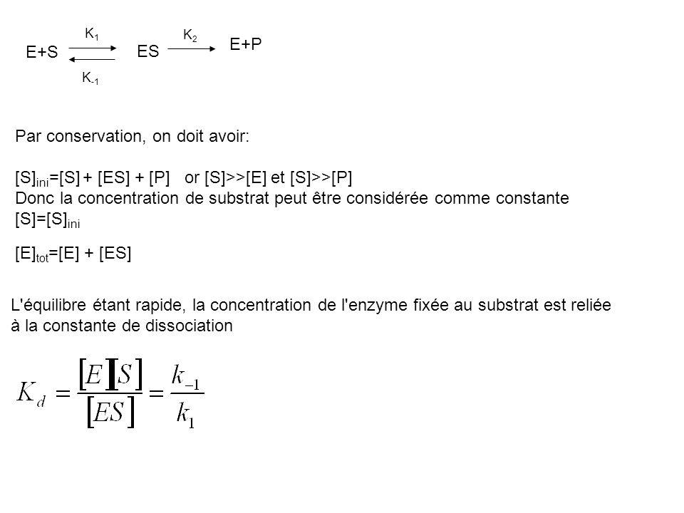 K1K1 K2K2 E+S ES K -1 E+P Par conservation, on doit avoir: [S] ini =[S] + [ES] + [P] or [S]>>[E] et [S]>>[P] Donc la concentration de substrat peut êt