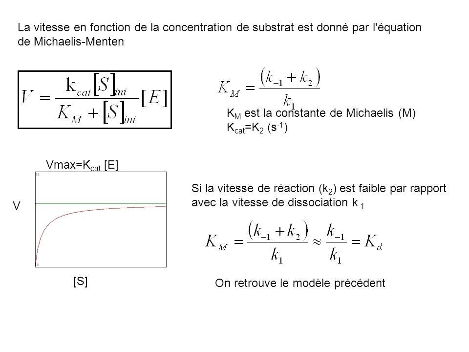 K M est la constante de Michaelis (M) K cat =K 2 (s -1 ) La vitesse en fonction de la concentration de substrat est donné par l'équation de Michaelis-