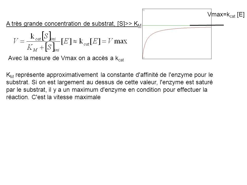 A très grande concentration de substrat, [S]>> K M Vmax=k cat [E] K M représente approximativement la constante d'affinité de l'enzyme pour le substra