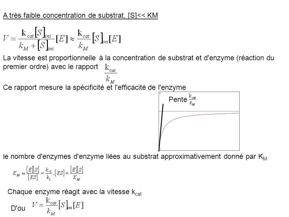 A très faible concentration de substrat, [S]<< KM La vitesse est proportionnelle à la concentration de substrat et d'enzyme (réaction du premier ordre