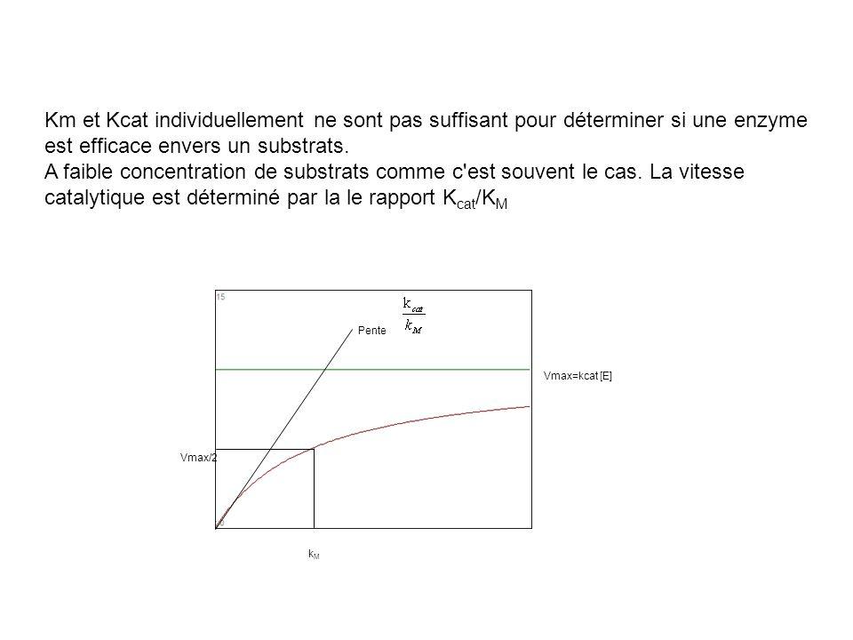 Km et Kcat individuellement ne sont pas suffisant pour déterminer si une enzyme est efficace envers un substrats. A faible concentration de substrats