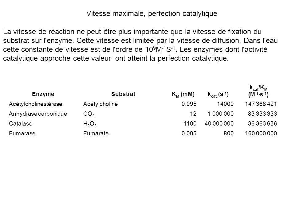 Vitesse maximale, perfection catalytique La vitesse de réaction ne peut être plus importante que la vitesse de fixation du substrat sur l'enzyme. Cett