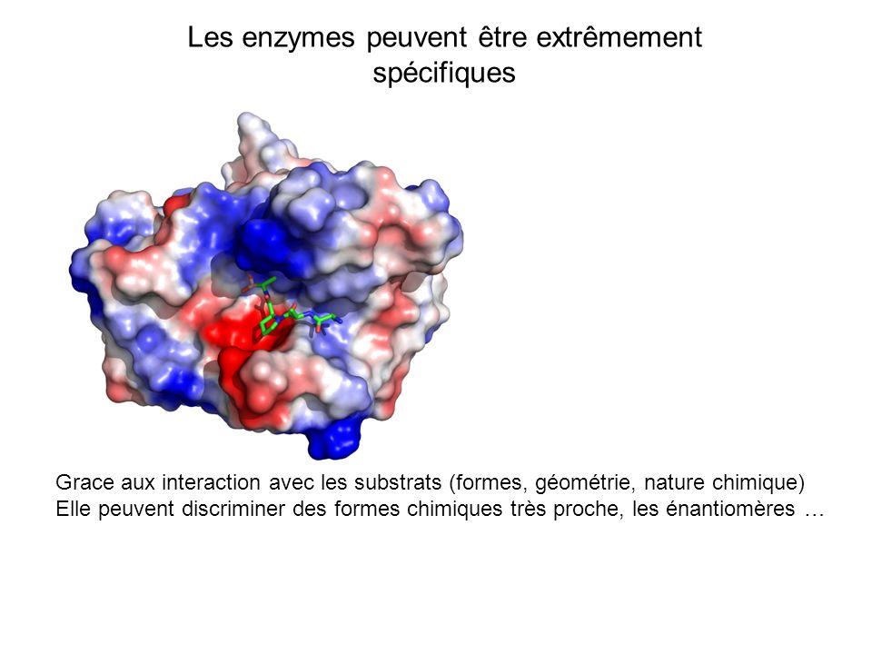 Les enzymes peuvent être extrêmement spécifiques Grace aux interaction avec les substrats (formes, géométrie, nature chimique) Elle peuvent discrimine