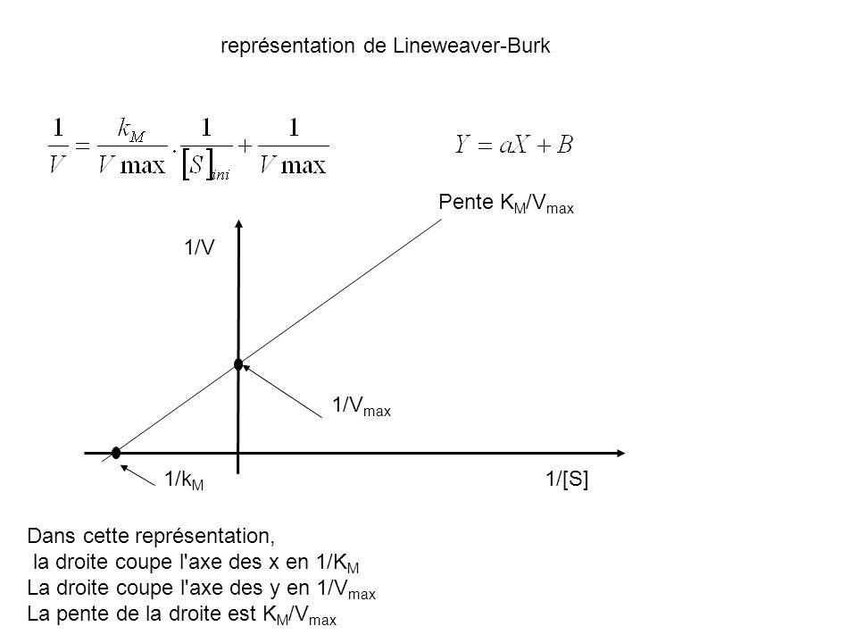 représentation de Lineweaver-Burk 1/V 1/[S]1/k M 1/V max Pente K M /V max Dans cette représentation, la droite coupe l'axe des x en 1/K M La droite co
