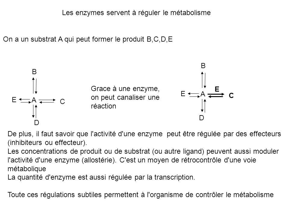 Les enzymes servent à réguler le métabolisme On a un substrat A qui peut former le produit B,C,D,E A B C D E A B C D E E Grace à une enzyme, on peut c