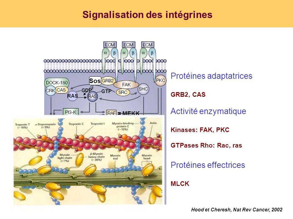 Signalisation des intégrines Hood et Cheresh, Nat Rev Cancer, 2002 Activité enzymatique Kinases: FAK, PKC GTPases Rho: Rac, ras Protéines adaptatrices