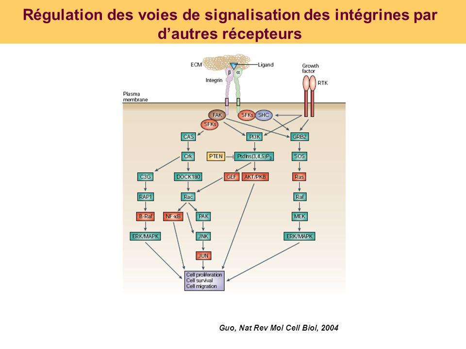 Régulation des voies de signalisation des intégrines par dautres récepteurs Guo, Nat Rev Mol Cell Biol, 2004