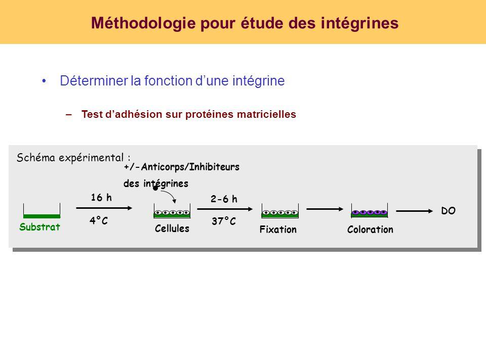 Méthodologie pour étude des intégrines Déterminer la fonction dune intégrine –Test dadhésion sur protéines matricielles DO Substrat 16 h 4°C Cellules