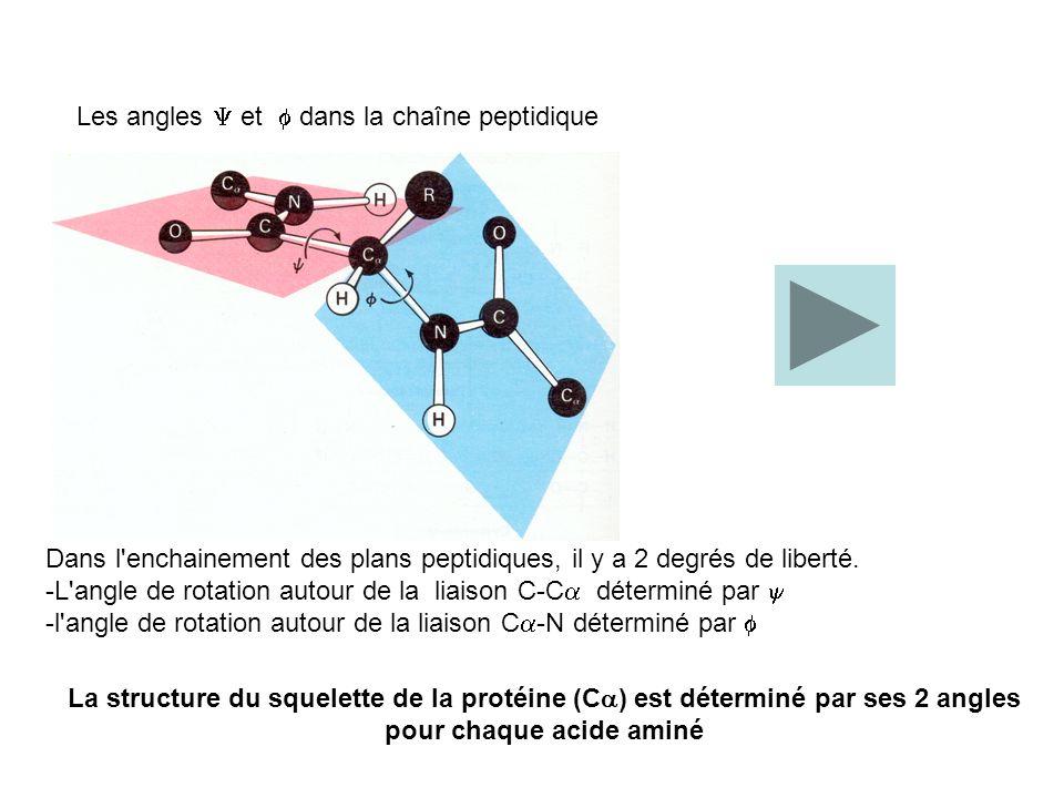 Les angles et dans la chaîne peptidique Dans l'enchainement des plans peptidiques, il y a 2 degrés de liberté. -L'angle de rotation autour de la liais