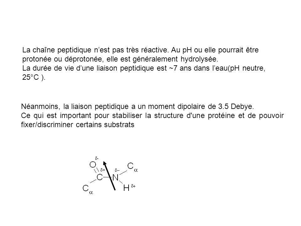 Néanmoins, la liaison peptidique a un moment dipolaire de 3.5 Debye. Ce qui est important pour stabiliser la structure d'une protéine et de pouvoir fi