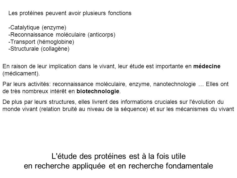 Les protéines peuvent avoir plusieurs fonctions -Catalytique (enzyme) -Reconnaissance moléculaire (anticorps) -Transport (hémoglobine) -Structurale (c