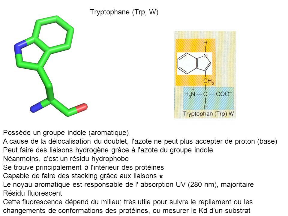 Tryptophane (Trp, W) Possède un groupe indole (aromatique) A cause de la délocalisation du doublet, l'azote ne peut plus accepter de proton (base) Peu