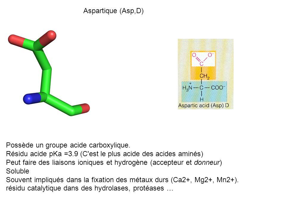 Aspartique (Asp,D) Possède un groupe acide carboxylique. Résidu acide pKa =3.9 (C'est le plus acide des acides aminés) Peut faire des liaisons ionique