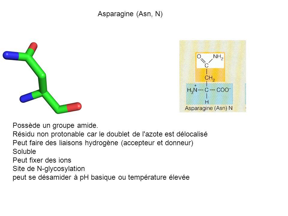 Asparagine (Asn, N) Possède un groupe amide. Résidu non protonable car le doublet de l'azote est délocalisé Peut faire des liaisons hydrogène (accepte