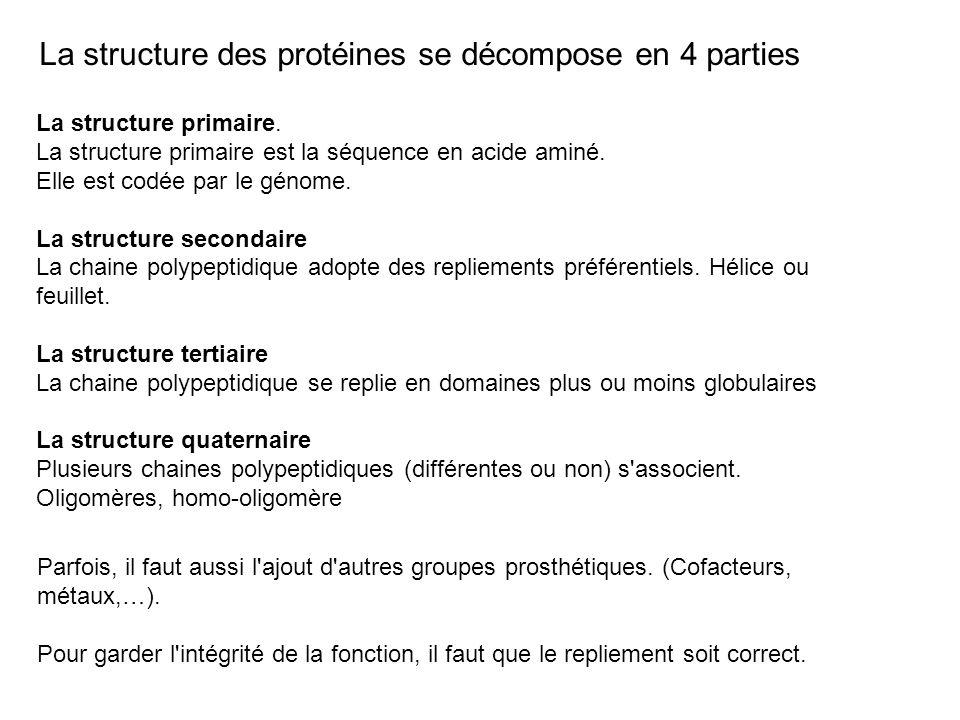 La structure des protéines se décompose en 4 parties La structure primaire. La structure primaire est la séquence en acide aminé. Elle est codée par l