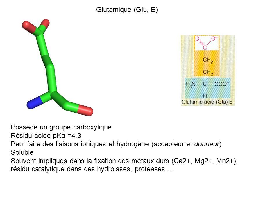 Glutamique (Glu, E) Possède un groupe carboxylique. Résidu acide pKa =4.3 Peut faire des liaisons ioniques et hydrogène (accepteur et donneur) Soluble